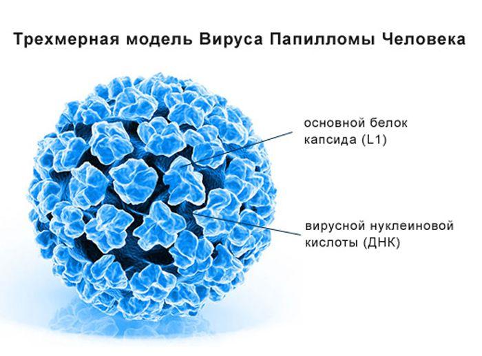 как выглядят папилломы на теле человека