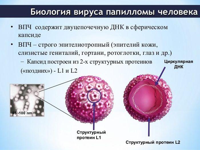 Biologiya-VPCH