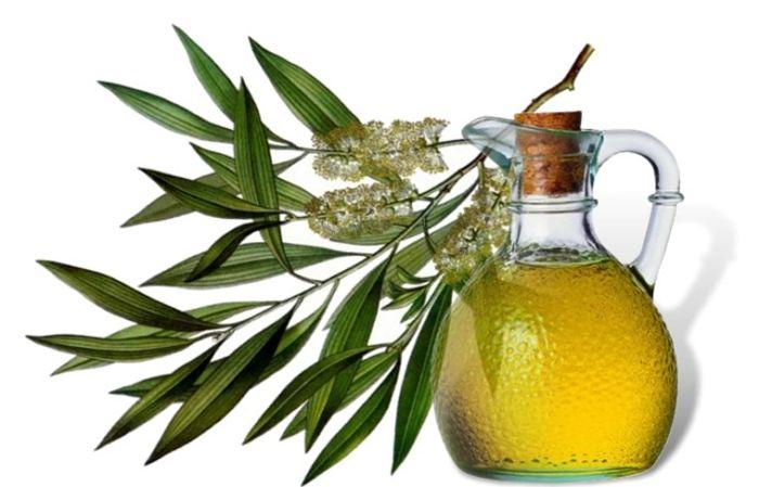 Стоит ли воспользоваться маслом чайного дерева от папилломы